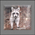 Tile-Murals-Backsplash_Animals-Racoon-01thumbnail.jpg