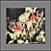 Tile-Murals-Backsplash_Flowers-Columbines-Red-01thumbnail.jpg